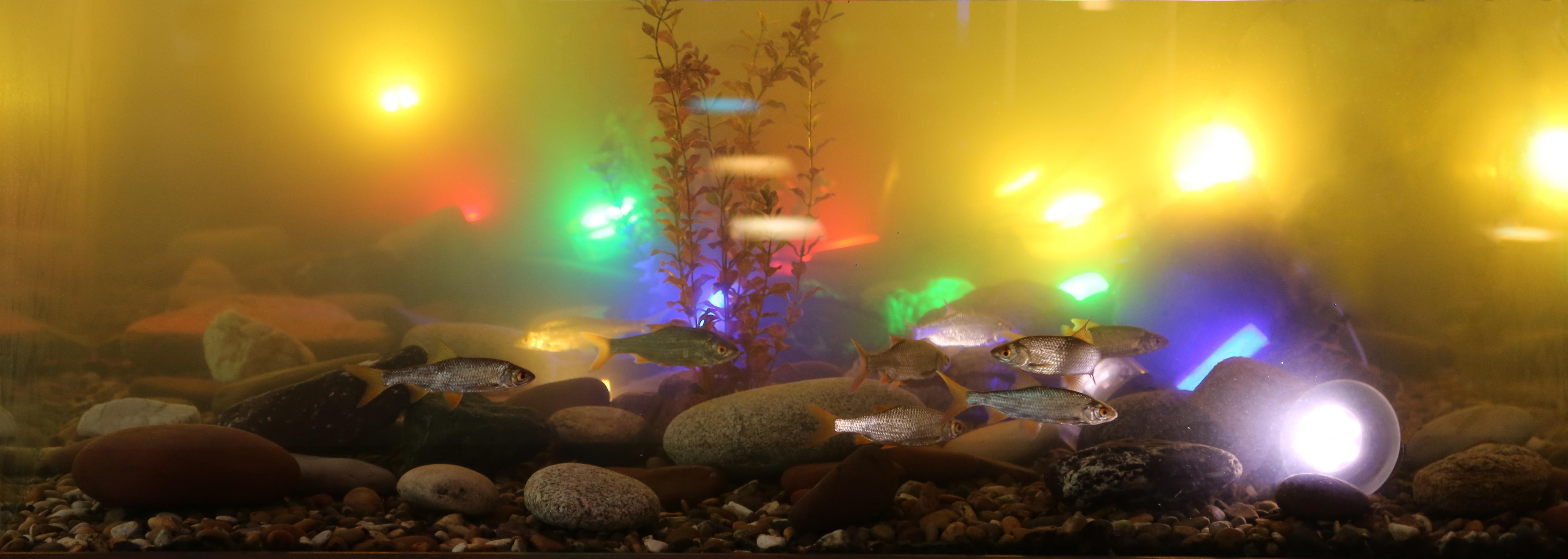 RGB освещение - новые возможности для дизайна, светильники TRIF